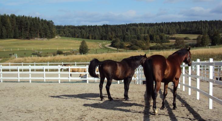 Jaloittelutarhan tulee olla hevoselle turvallinen.